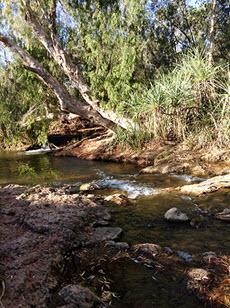 Albert River, near Burketown, North Queensland
