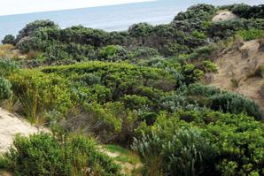 Eumeralla (Yambuk) coastal reserve, Victoria
